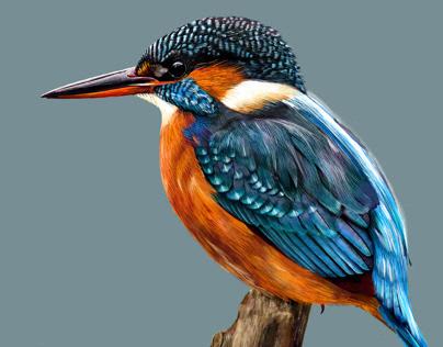 Birds of Adobe Fresco. First drawings in Adobe Fresco