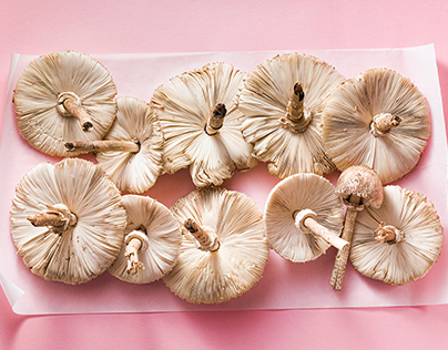 mushroom caps on a pink background.