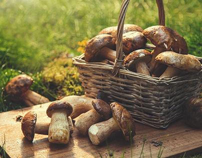 Mushrooms Photo for Web Site