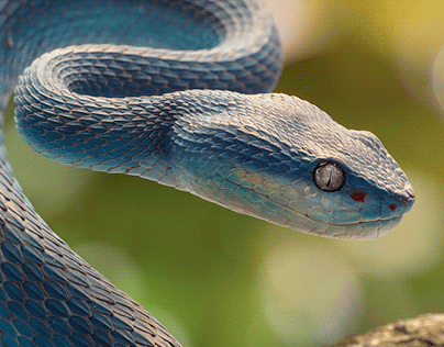 Blue (3D)