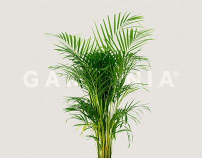 Gardenia – Brand Identity