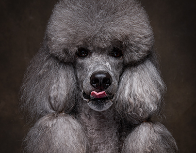 POODLE DAY