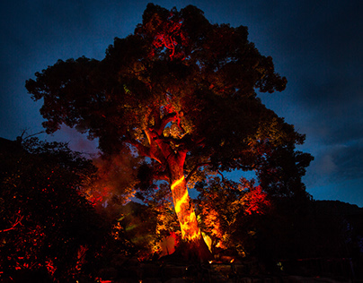 MYSTIC TREE SHOW