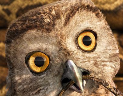 Owl - Baudducco
