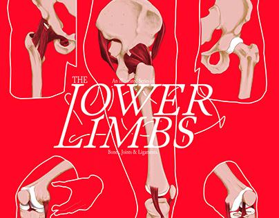 THE LOWER LIMBS