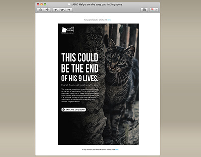 ELECTRONIC DIRECT MAILER - CAT WELFARE SOCIETY //