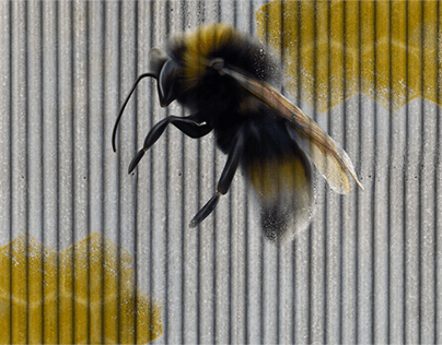 Corrugated Bees