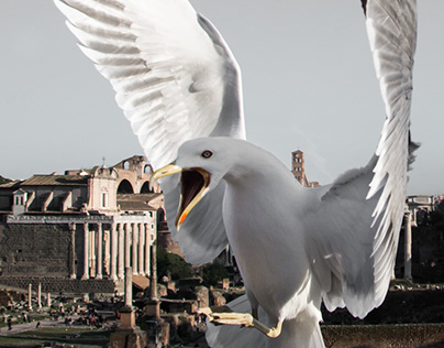 From Rome, With Birds ...