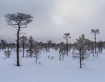 Estonian Winter