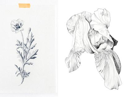 Botanical Collection | Wallpaper