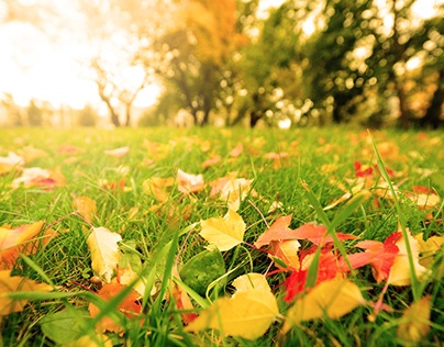 Content Writing: Fall Lawn Care