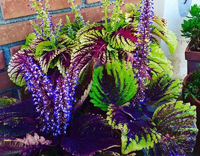Purple Flowers | Jutta Curatolo