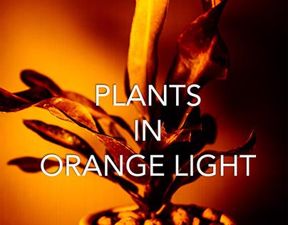 Plants in orange light