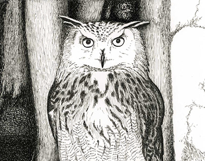 illustrations of owls