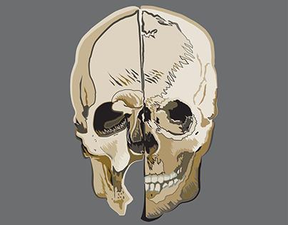 Leonardo Da Vinci Skull Study {- Symptoma Graphica -}