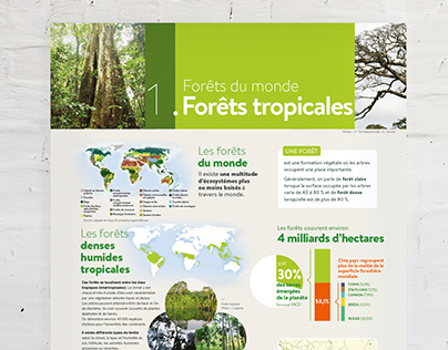 Posters grands formats Forêts tropicales