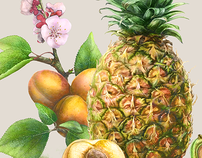 Healthy Food Illustrations