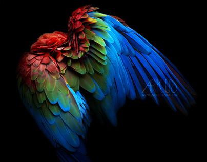Parrot serie