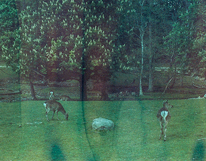 chasing after deers
