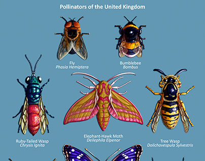 Pollinators of the United Kingdom