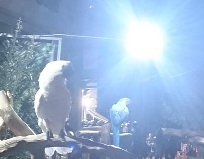 Nightshot - Parrots