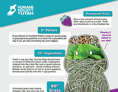 Infographics for small pet care