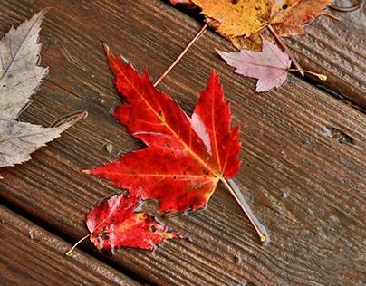 Fall Photos of Maryland