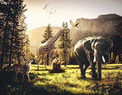 photo manipulation (animals)