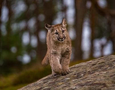 Rencontre cougar : les sites pour rencontrer une femme mature