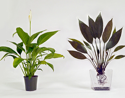 Flat Houseplants
