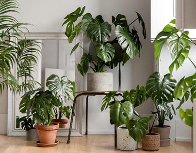 3D Collective 3D Scanned Plants
