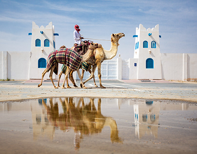 Camel Race | Qatar