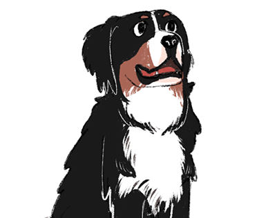 Drawing a Bernese Mountain Dog