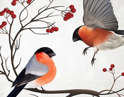 Illustration. Bullfinches.