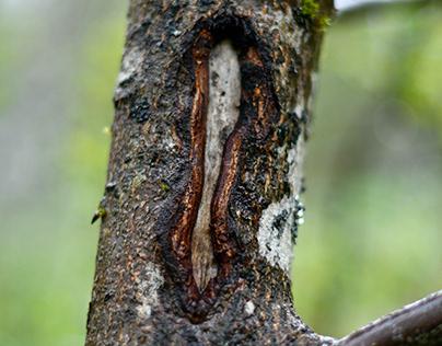 Treeopening