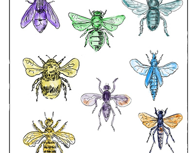 Vintage Bees and Flies Collection on White background