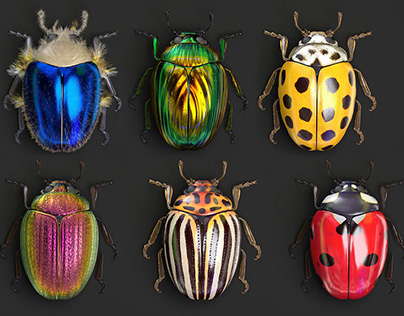 Beetle collection