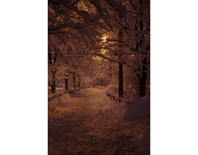 Snow covered city park at night winter