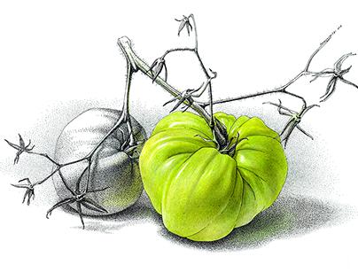 «Green tomato»
