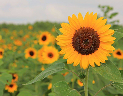 Nature Photography: United States