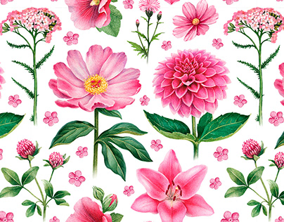 Pink flowers. Illustrations and pattern designs