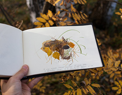 Forest diary 2016: sketches and paintings.