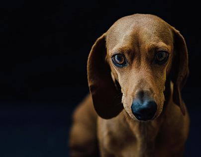 Roberto \\ Pet Portrait.