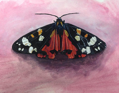 Watercolour moths