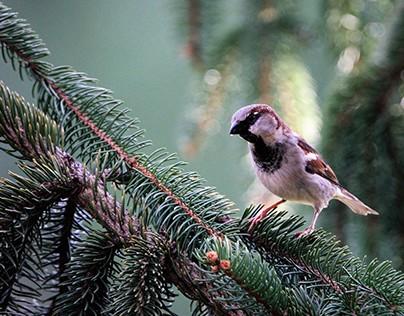 Birds - Ptice