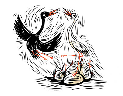 A Storks Tale