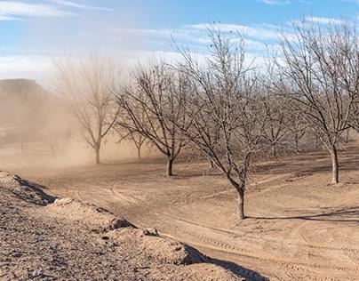 NEW MEXICO PECAN FARMING: DAY 3