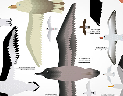 Birds of Antarctica