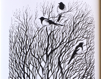 Magpies on birches