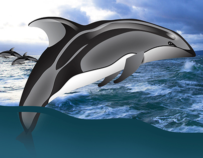 Pacific White-Sided Dolphin Header